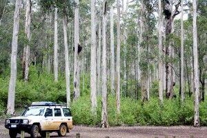 Mit dem Camper durch Westaustralien