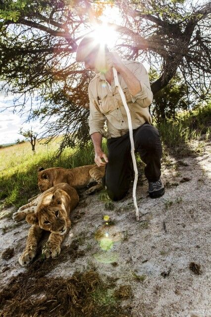 Walk with the Lions im Antelope Park