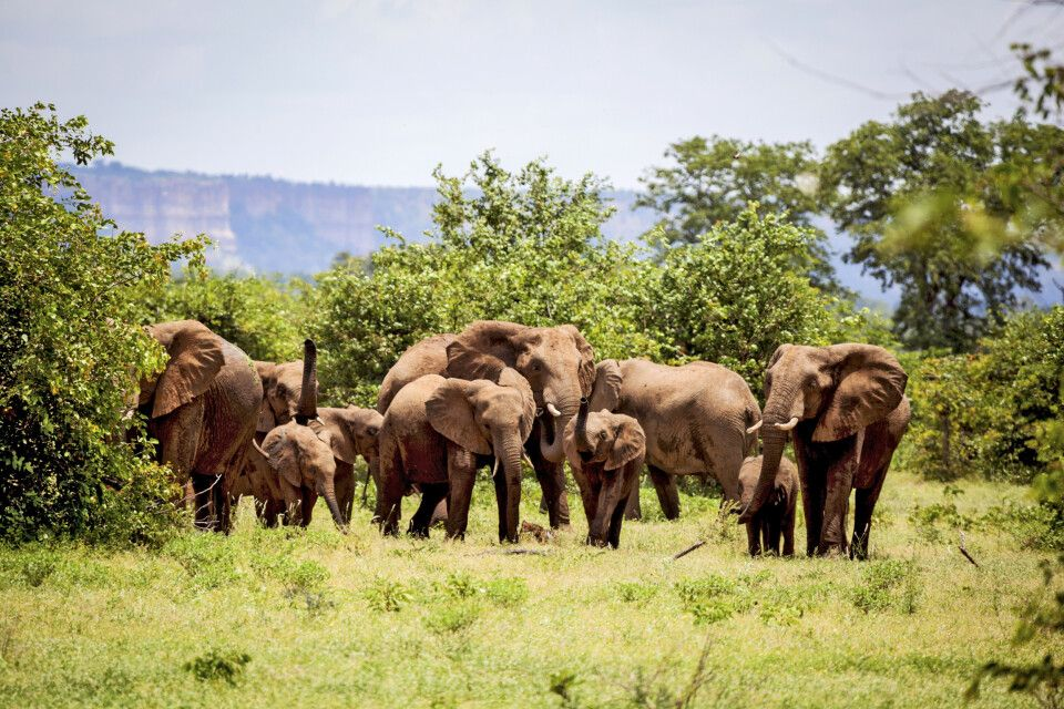 Elefantenherde vor der Chilo Gorge