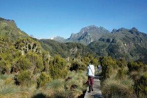 Marsch in die Ruwenzori Berge