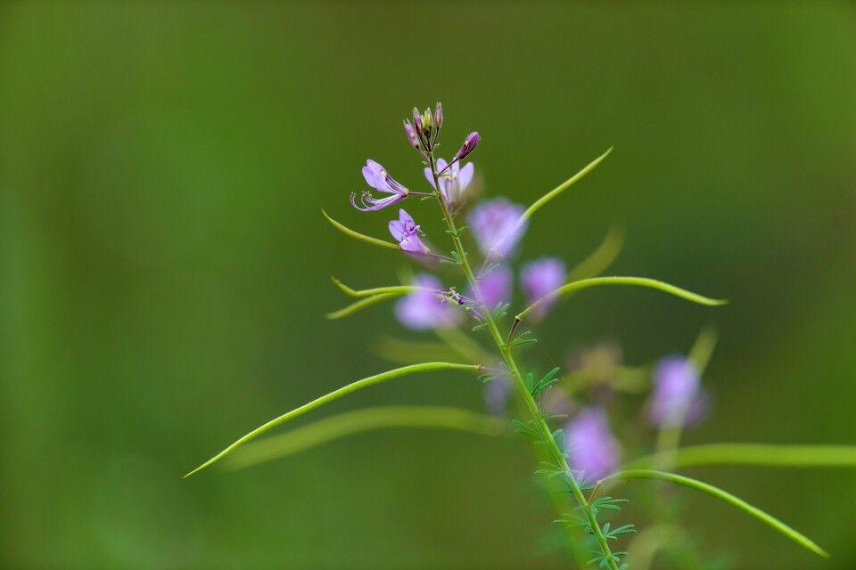 Die Flora im Fokus: Spielerei mit der Schärfentiefe