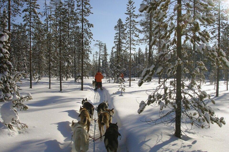 Lautloses Gleiten durch die Winterlandschaft