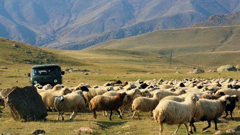 Schafherde im Armenischen Hochland © Diamir