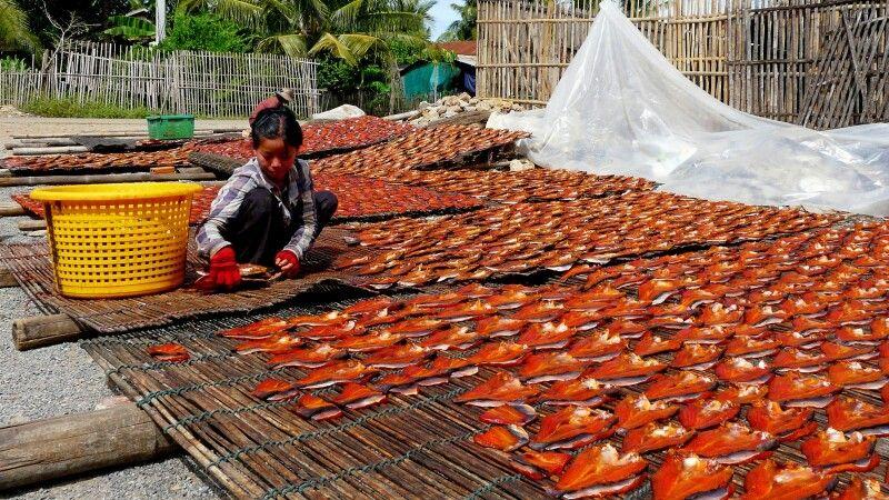 Frischer Fisch wird zum trocknen ausgelegt © Diamir