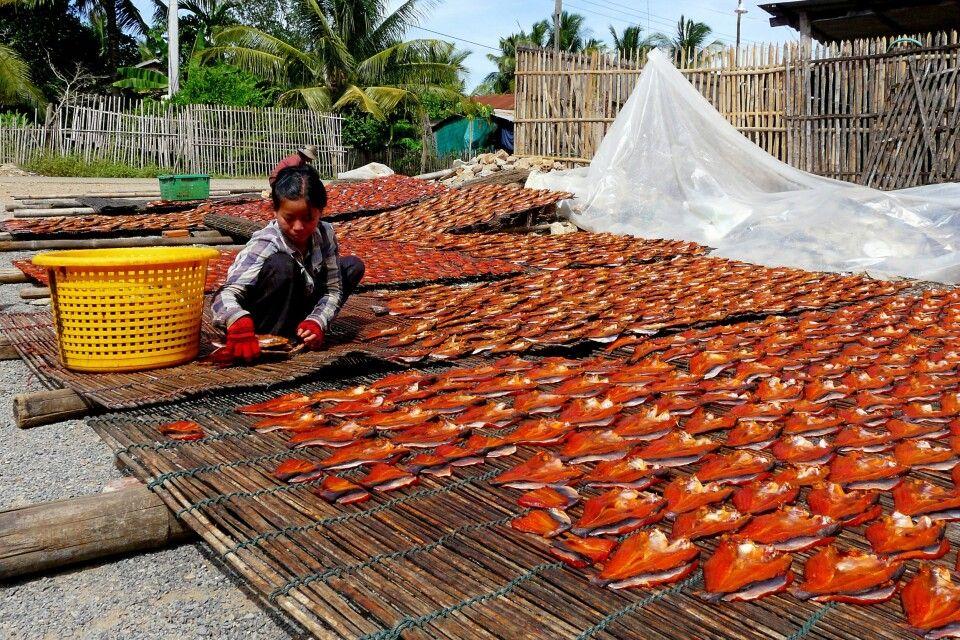 frischer Fisch wird zum trocknen ausgelegt