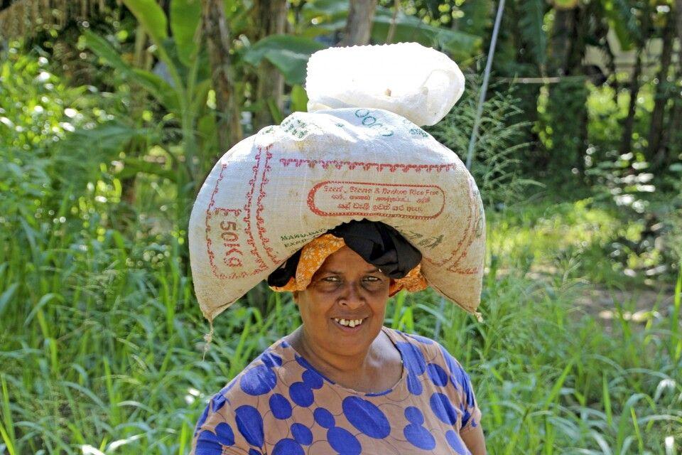Einheimische Frau während Wanderung in Sigiriya