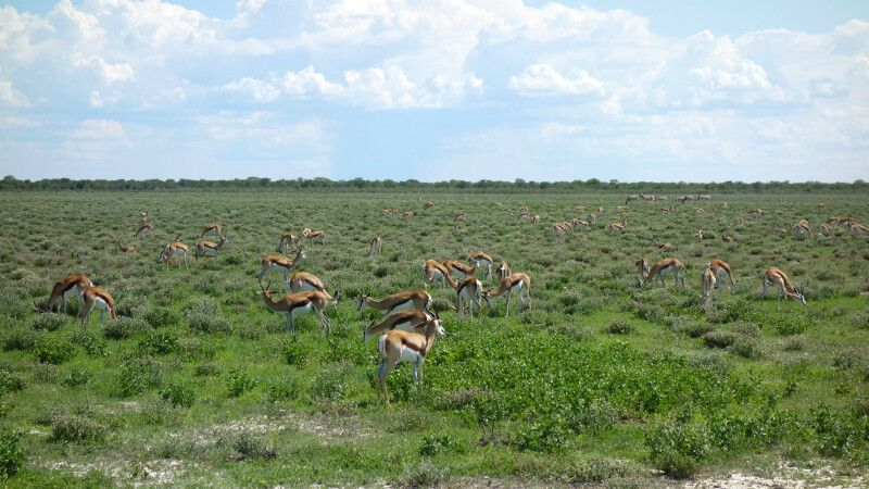 Etosha-Nationalpark © Diamir