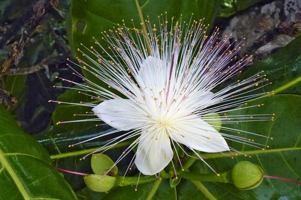 Exotische Blumen auf Masoala