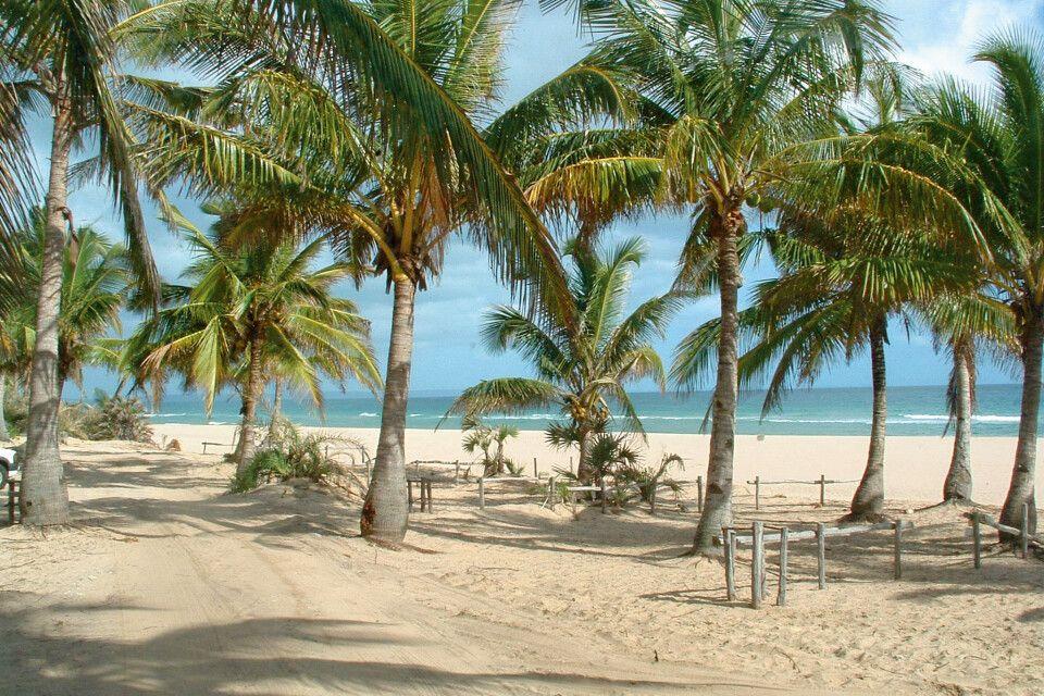 Palmenstrand am Indischen Ozean