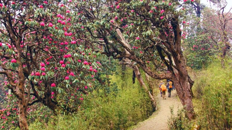 Trekkingweg bei Tadapani © Diamir