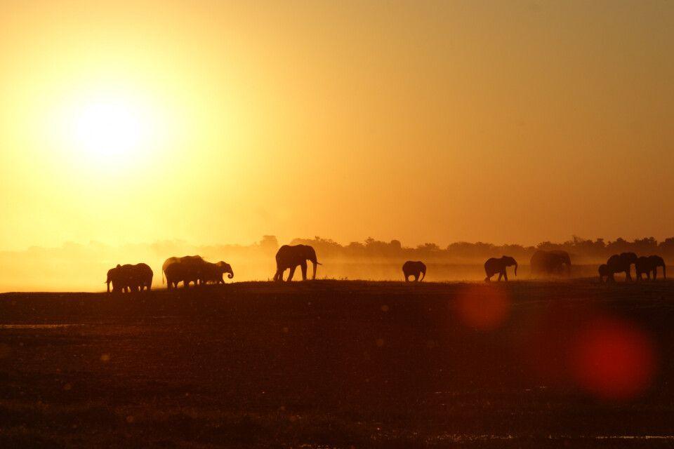 Elefantenherde im Sonnenuntergang