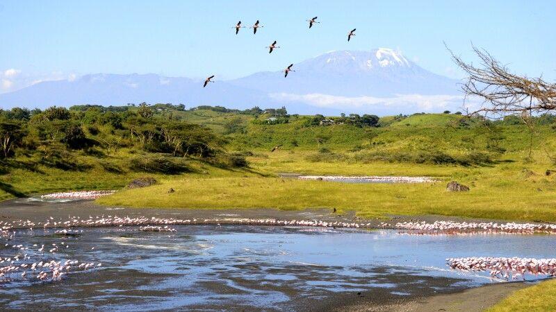 Flamingos im Großen Momella-See vor dem Kilimanjaro © Diamir
