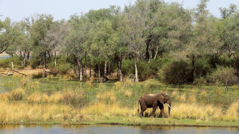 Sichtung eines Elefanten vom Zeltdeck © Diamir