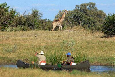 Treff mit einer Giraffe beim Kanufahren