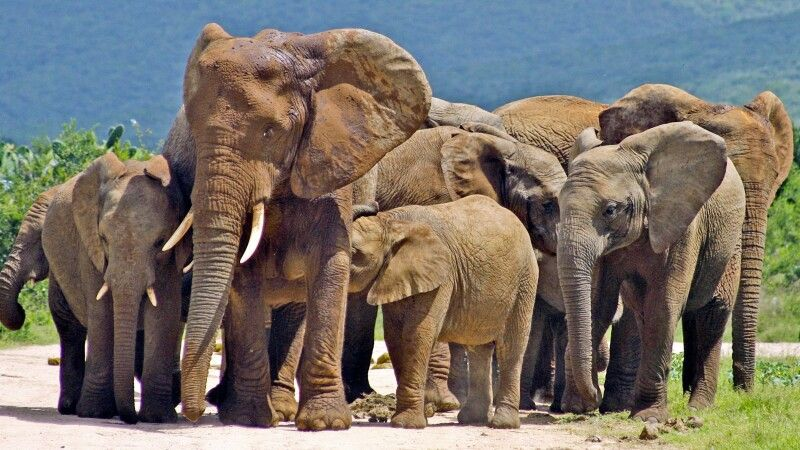 Elefant Addo Elephant Nationalpark © Diamir