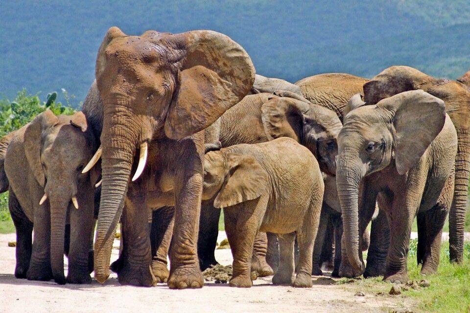 Elefantenherde im Addo-Elephant-Nationalpark