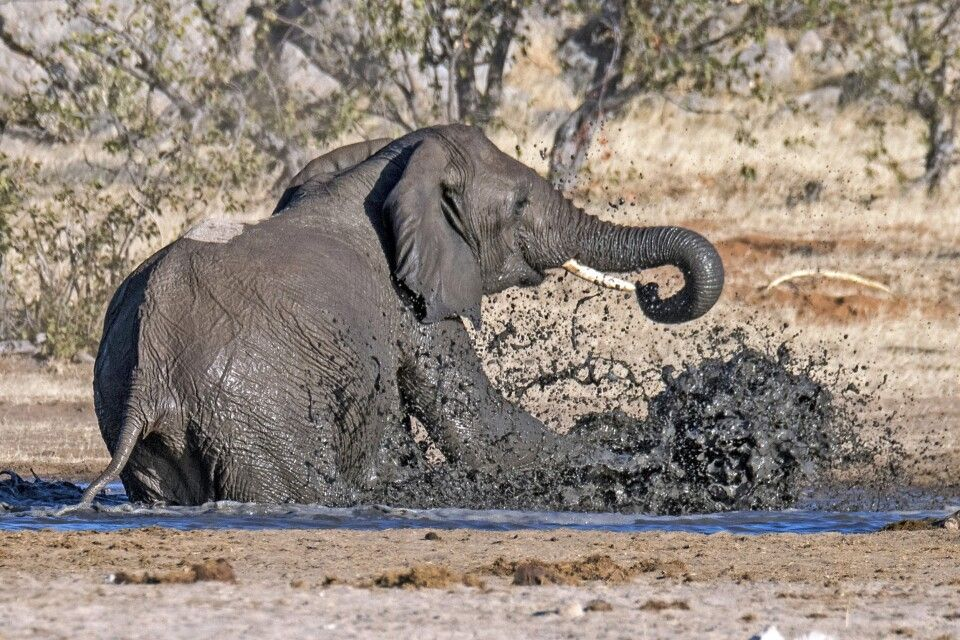 Elefantenbad im Etosha NP
