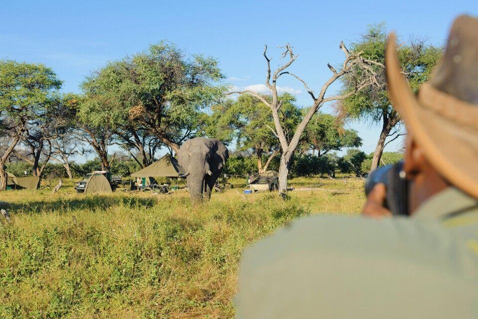 Elefanten Begegnung auf Pirsch