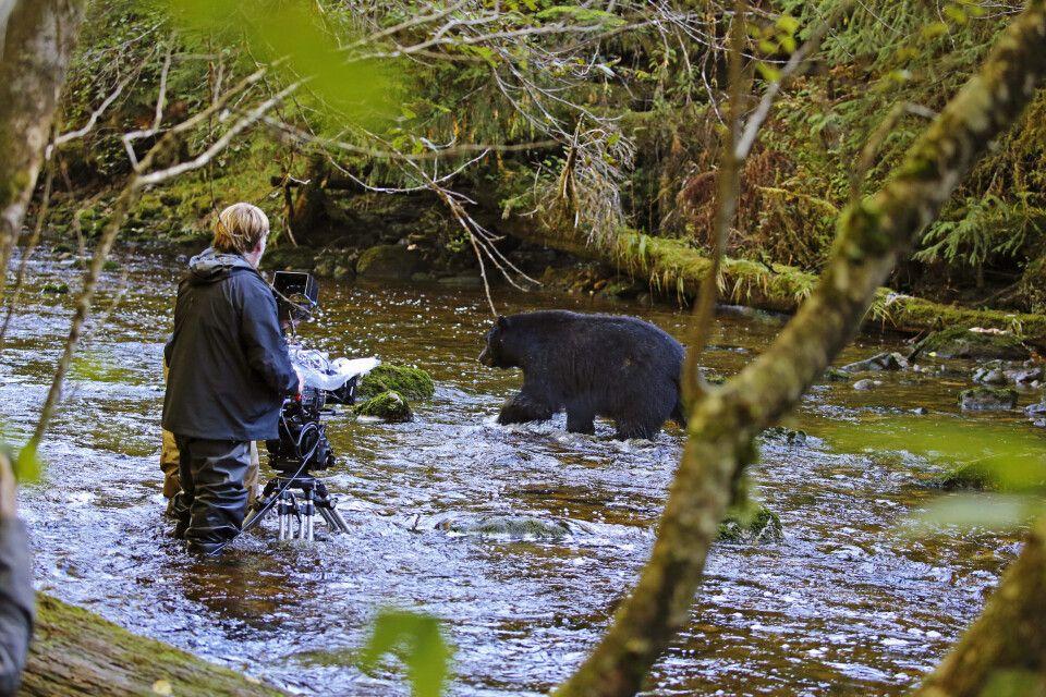 Fotograf mit Schwarzbär nahe Hartley Bay