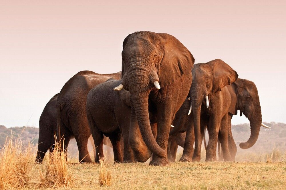 Imposante Elefantenherde