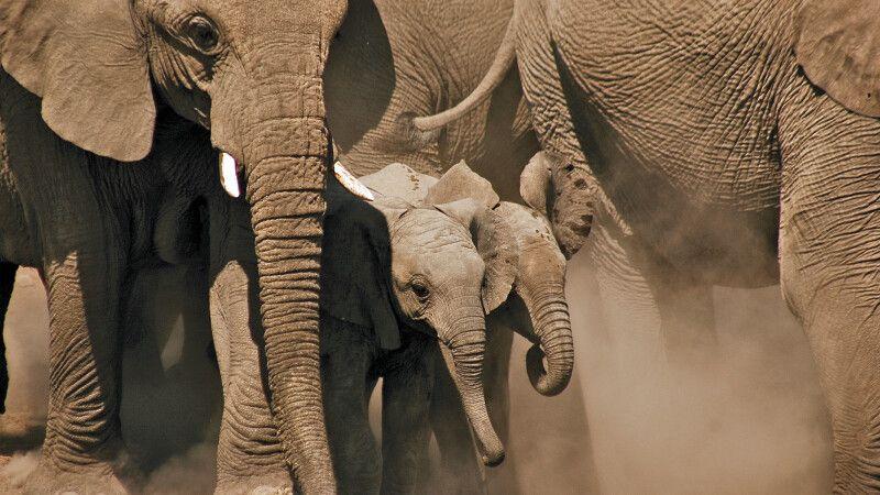 Elefanten im Etosha-Nationalpark © Diamir