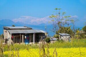 Blick von Chitwan auf den Himalaya