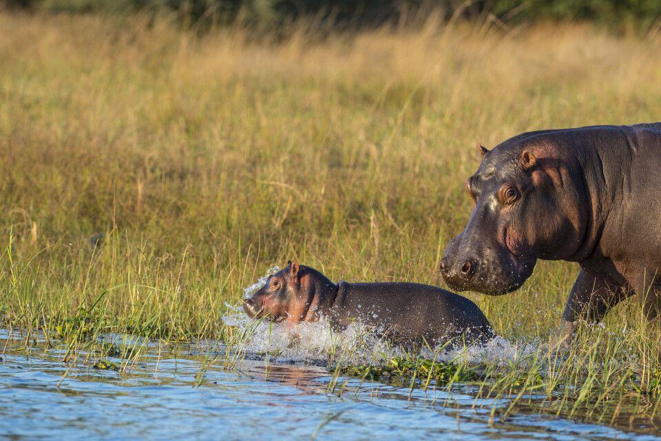 Im Liwonde-Nationalpark in Malawi