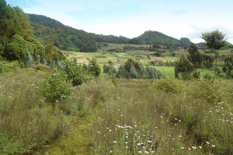Kultivierte Landschaft am Volcanoes NP