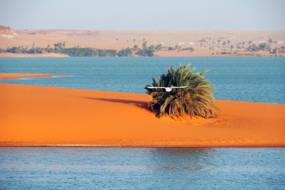 Oasenszene im Tschad