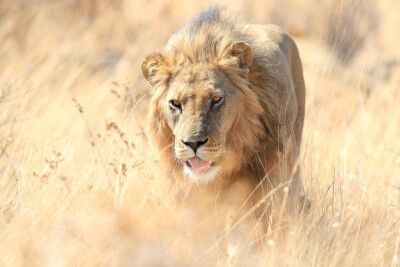 Reisetraum Botswana - statt träumen selbst erleben ...
