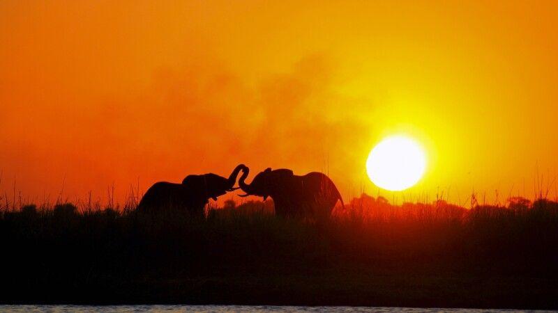 Elefanten im Sonnenuntergang © Diamir