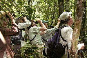 Unterwegs im spektakulerem Dschungel auf der Suche nach Tieren und der außergewöhnlichen Pflanzenwet