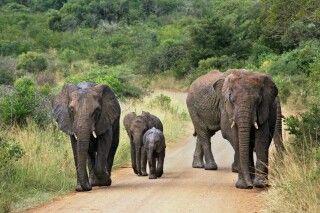 Elefanten im Krüger-Nationalpark