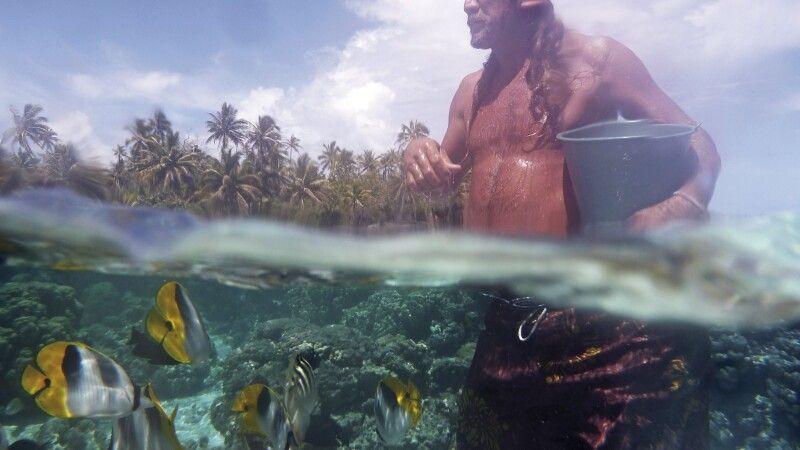 Unterwasserwelt auf Tahiti © Diamir
