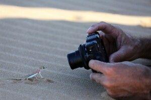 Putziger Gecko bei der Living Desert Tour