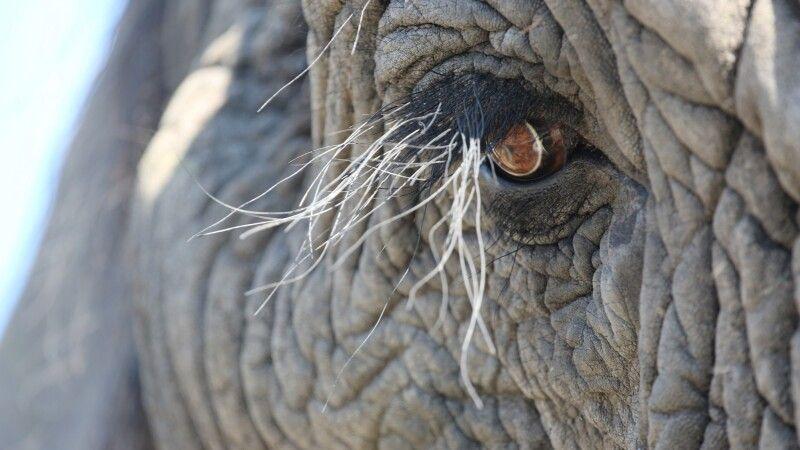 Elefant © Diamir