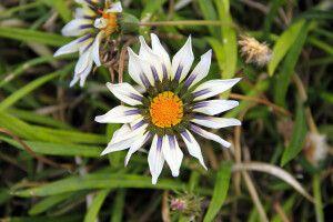 Eine Blume am Wegesrand