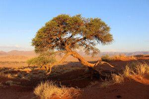 Skurille Formen in der Namib