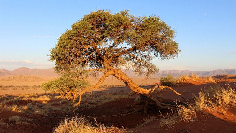 Skurille Formen in der Namib © Diamir