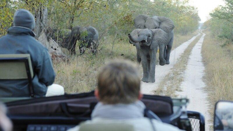 Auf Safari, Sabi Sands, Krüger-Nationalpark, Südafrika © Diamir