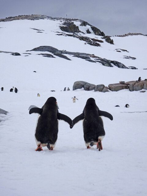 Unterwegs an der Antarktischen Halbinsel