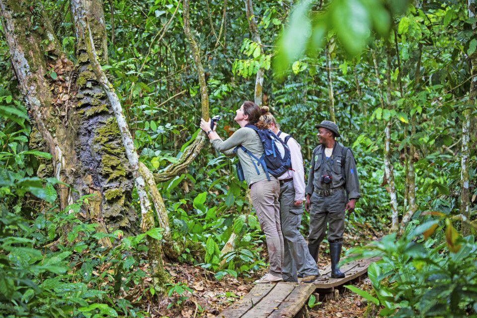 Fuß-Safari im Regenwald