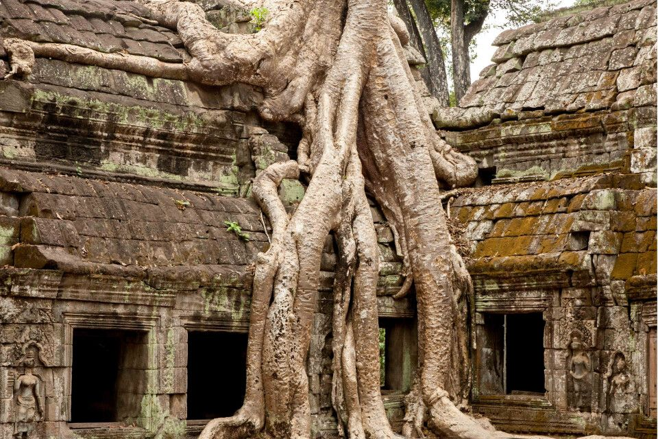 Im Dschungeltempel von Tha Prohm