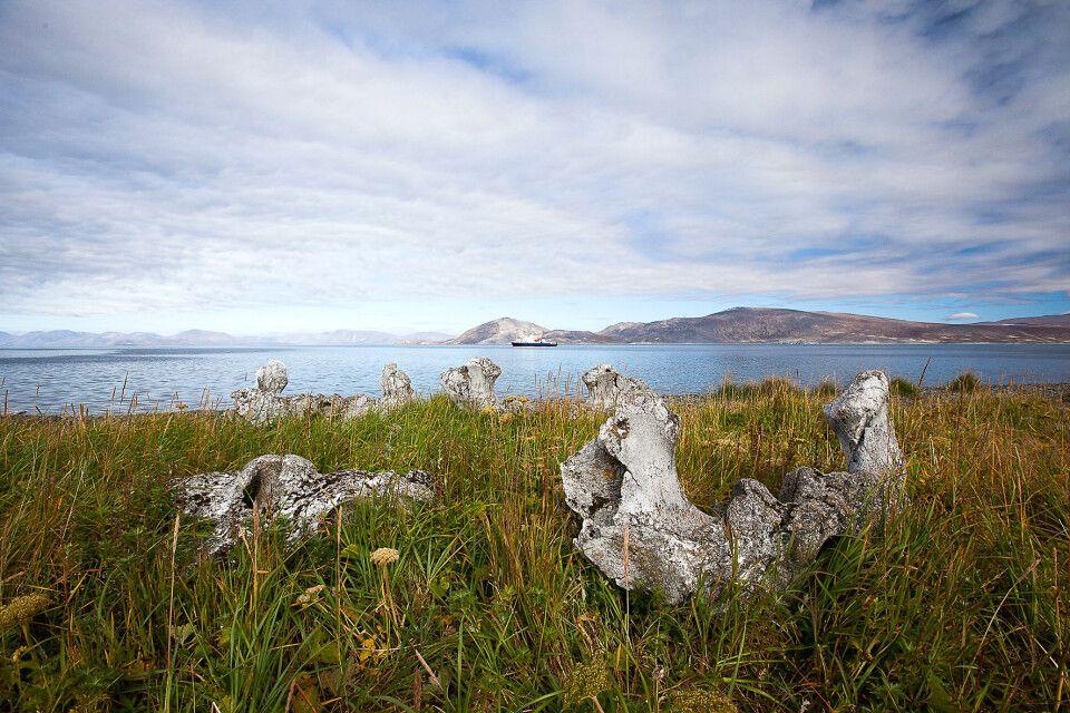 Traumhafte Landschaft mit uralten Walknochen