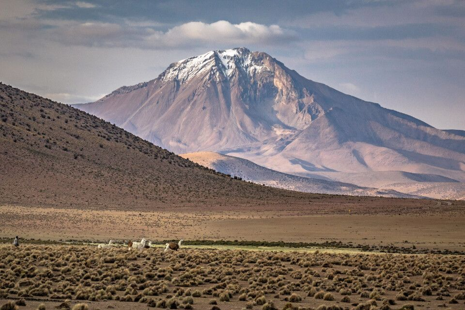 Lama-Karawane vor faszinierender Bergkulisse