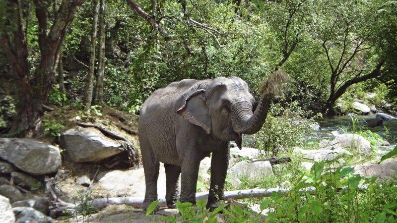 Elefant im Norden von Thailand © Diamir