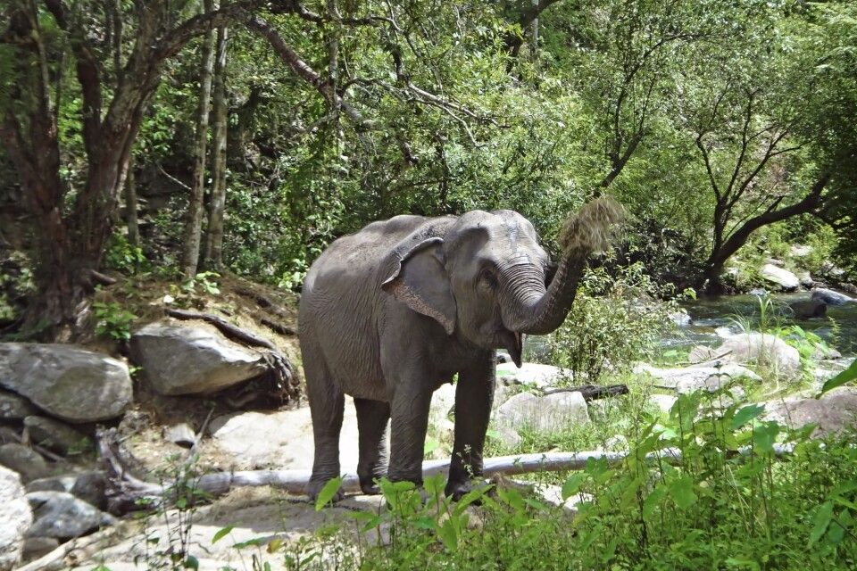 Elefant im Norden von Thailand