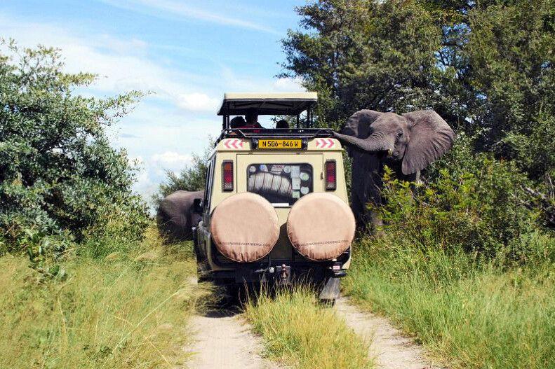 Den Wüstenelefanten ganz nah