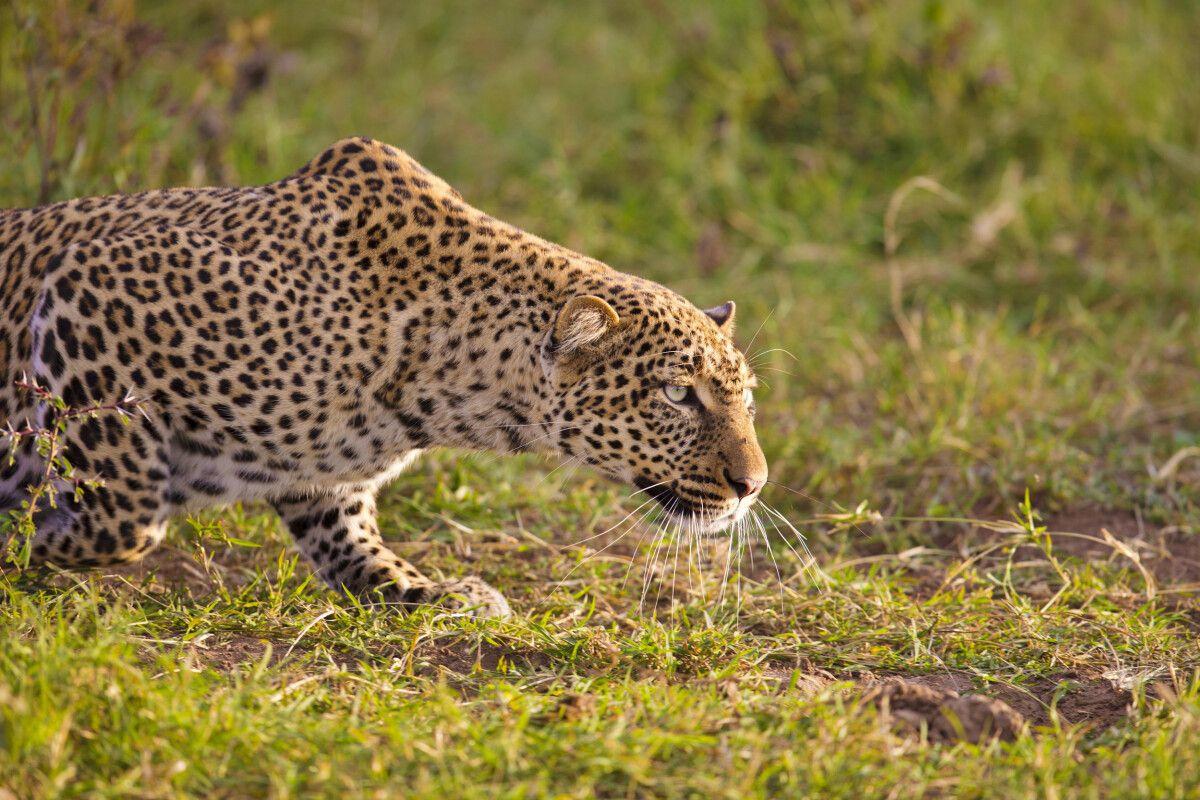 Tansania – 11 Tage Fotosafari mit Michael Lohmann