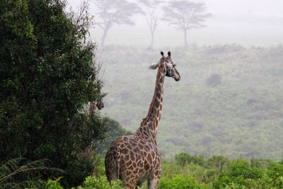 Blick in den Arusha Nationalpark